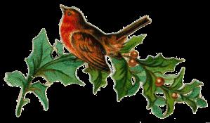 Christmas vic bird
